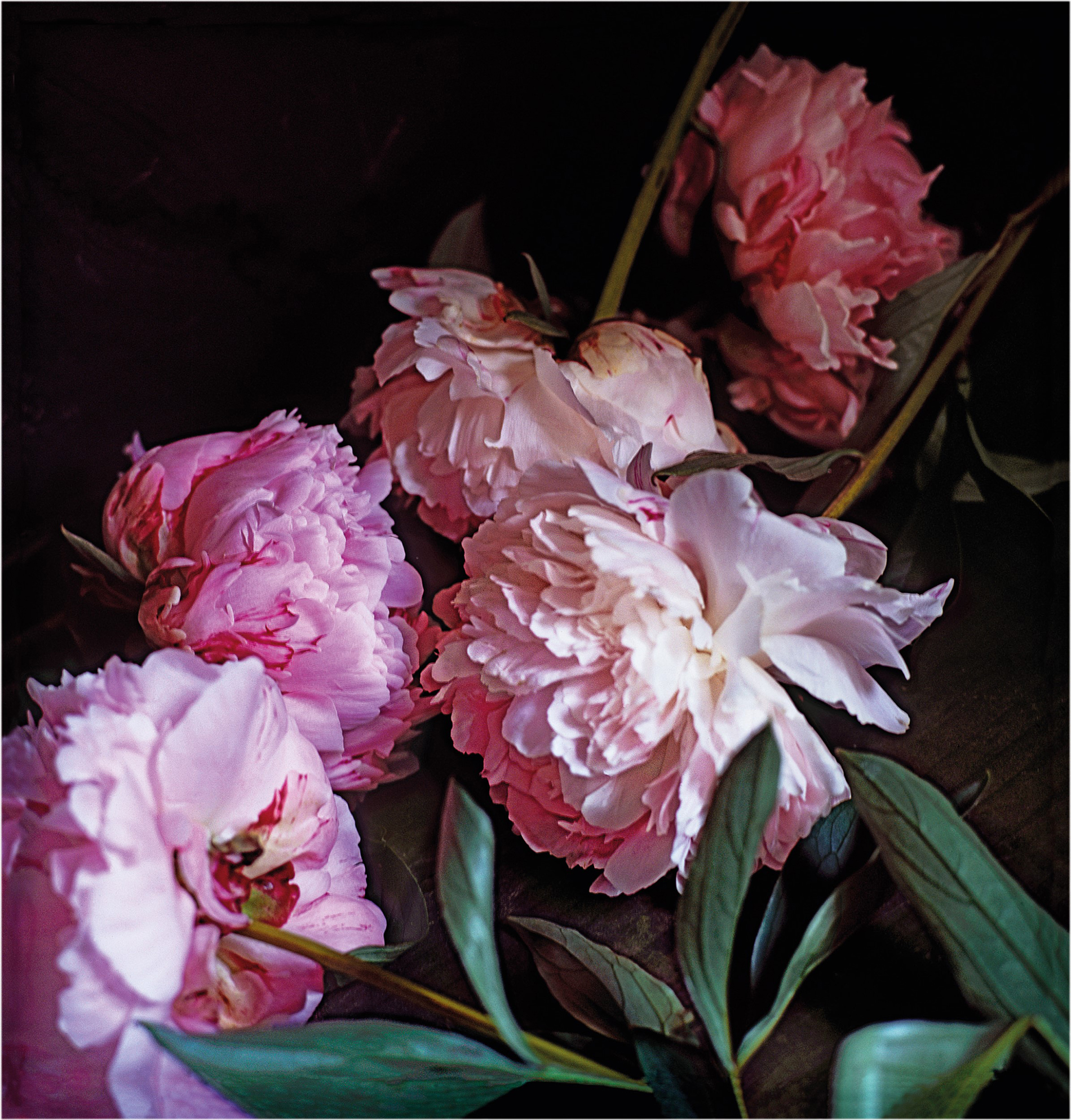 Craigie Horsfield Five Peonies. Via Chiatamone, Naples. May 2010 2013. Courtesy der Künstler und Large Glass, London