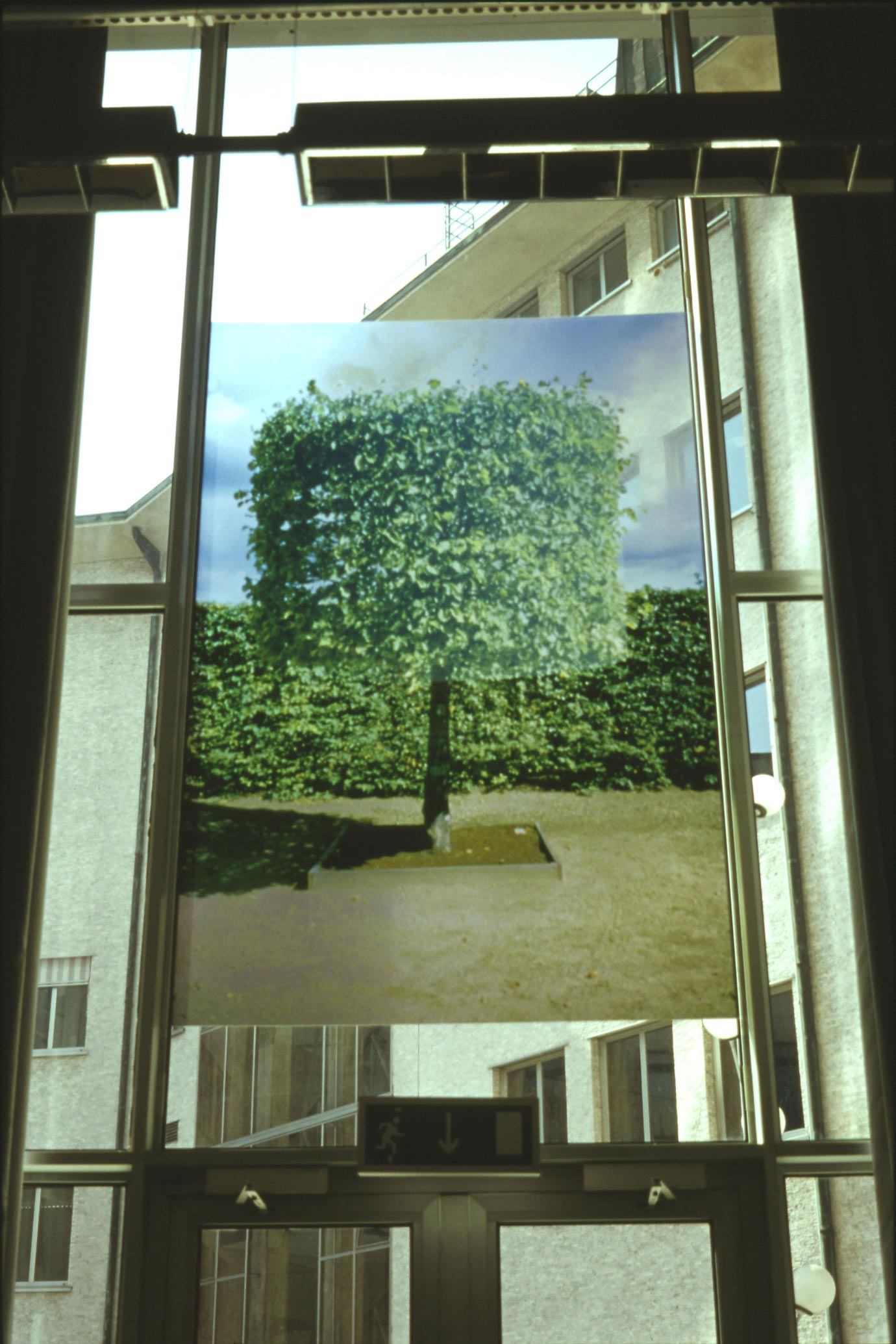 The photograph of the third tree