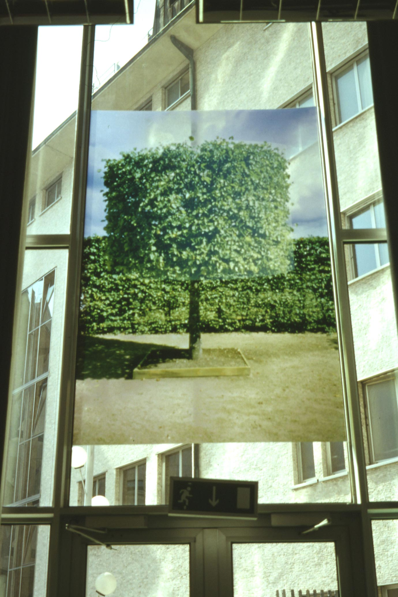 The photograph of the fourth tree