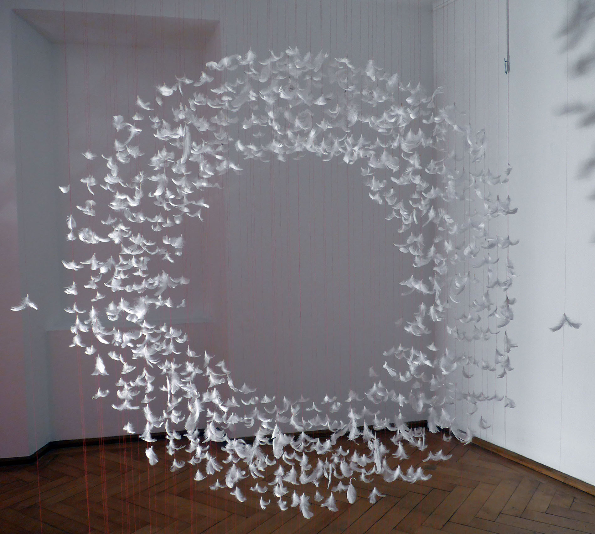 Isa Barbier, sans titre, 2019, Installation mit Möven- und Gänsefedern, variable Dimension
