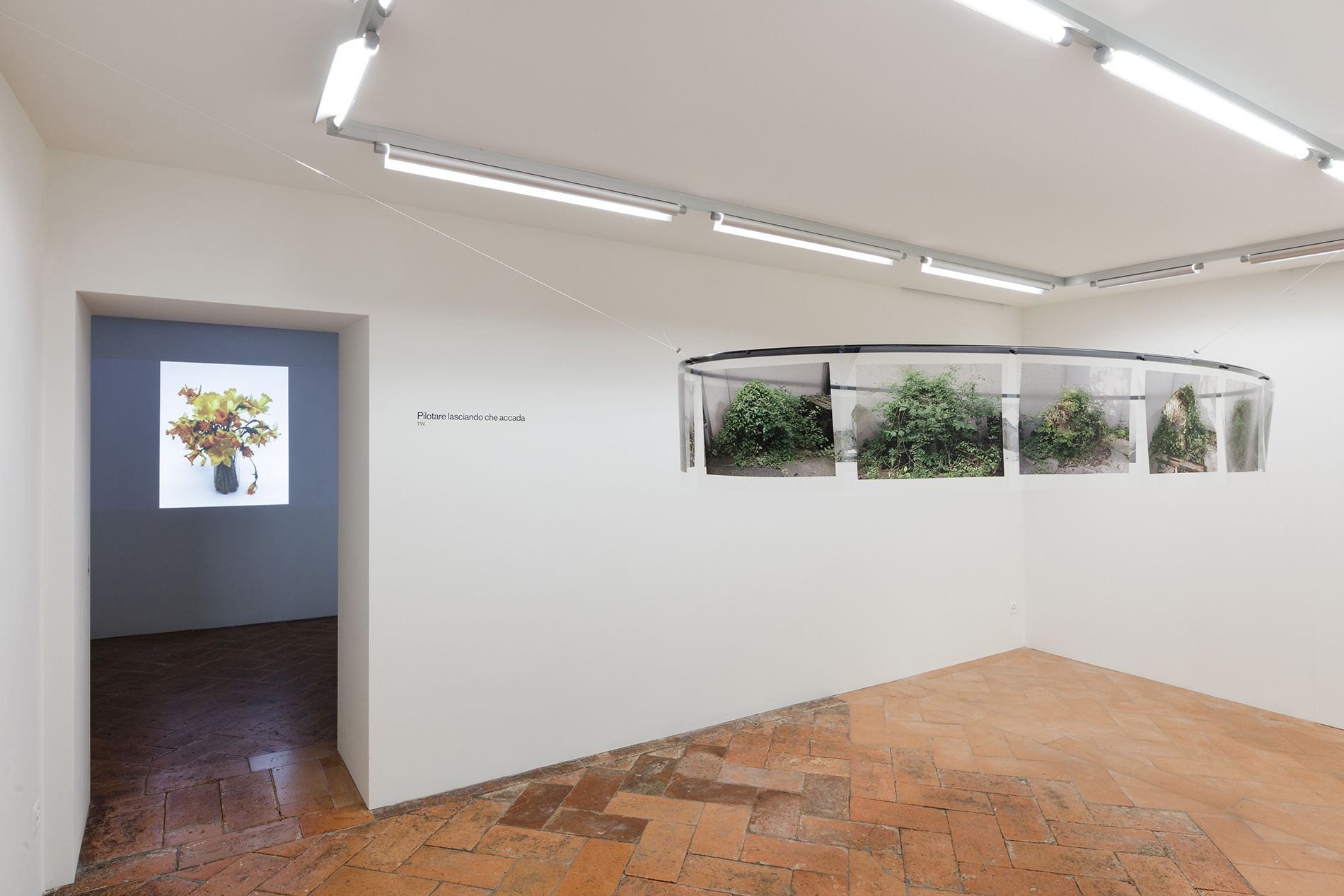 Teres Wydler, Ausstellungsansicht. Links: Lily's. Artificio in natura, natura in artificio, 2018, video. Rechts: Cà verde, 2002-2018, Installation, 14 Prints auf Transparentpapier auf einer Stahlellipse mit Magneten