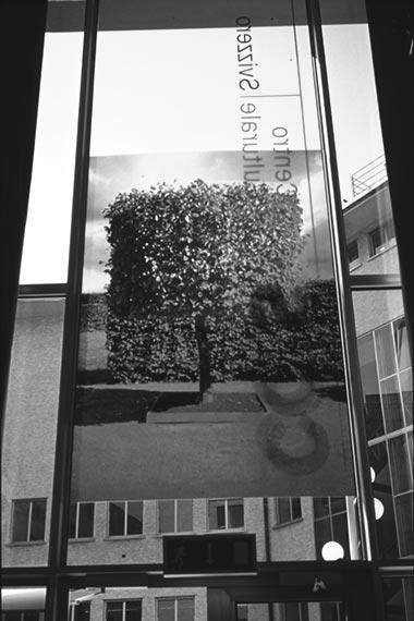 Gli alberi di Pitagora